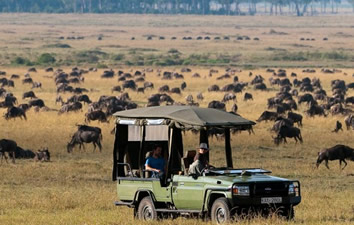 Kenya Wildebeest Migration