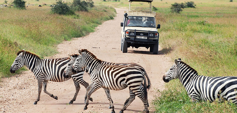 africa-tanzaniasafari0
